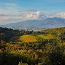 完全無農薬・30年以上有機栽培のオーガニックワイナリー「Gratena(グラテーナ)」イタリア・トスカーナ
